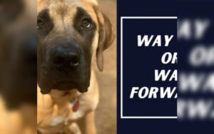 Dog Training near me? We offer mobile dog training services to Destin, Santa Rosa Beach, Miramar Beach, Grayton Beach, Panama City, Panama City Beach, Tyndall AFB, Freeport, Sandestin, Hurlburt Field, Eglin AFB, Seaside, Watercolor, Seagrove, Blue Mountain Beach, SanDestin, Tiger Point, Shalimar, Mary Esther, Pace, Cantonement, Fort Walton Beach, Navarre, Gulf Breeze, Milton, Niceville, Bluewater Bay, Crestview, Mossy Head, Defuniak Springs, Bonifay, Chipley, Freeport, 30A, Pensacola, and Perdido Key! Escambia, Santa Rosa, Okaloosa, Walton, Holmes, Washington, and Bay County. With over 40+ years of combined experience, we will work with any breed to fix any issue. Our private, individual lessons focusing on working together with you the owner and your dog, to train the dog's on and off leash obedience to fit your lifestyle. We fix chewing, jumping, leash pulling, aggressiveness, anxiety, reactivity and territorial behavior. Each training obedience package comes with a variety of client perks, including trainer continuity, unlimited support access, location convenience and more. Our Advanced Programs include: Aggressive Dog Rehabilitation Program, Emotional Support Dog Program, Service Dog Program.
